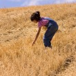 Searching for leftover wheat stalks — Stock Photo