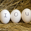 Nest egg IOU. — Stock Photo