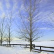 Winter on the Prairie - Stock Photo