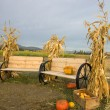 Stock Photo: Corn stalks and benches.