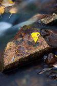 Yellow leaves in fast water. — Stock Photo
