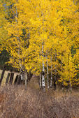 Yellow leaves in fall. — Stock Photo