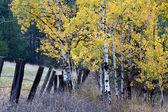 Hojas de otoño. — Foto de Stock