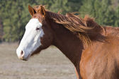 Side view of a horse. — Stock Photo