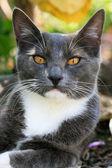 Portrait einer katze. — Stockfoto