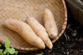 Sweet potatoes in a basket. — Stock Photo