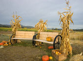 Corn stalks and benches. — Stock Photo