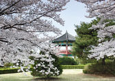 Korean Pavillion in a beautiful park. — Stock Photo