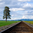 Panorama of tracks in the field. — Stock Photo