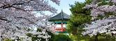 Panoramic of a Korean pavilion. — Stock Photo