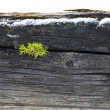 Stock Photo: Moss grows in wood post.