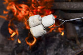 Marshmallows over the fire. — Stock Photo