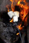 Roasting marshmallows. — Stock Photo