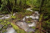 山中的小溪. — 图库照片