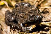Frog sitting — Stock Photo