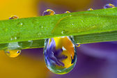 Water droplets, wild flowers and a blade of grass — Stock Photo