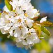 Flowers and blossom in spring - Stock Photo