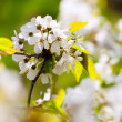 Flowers and blossom in spring — Stock Photo