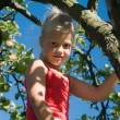 A little girl picking an apple - Photo