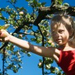 Stock Photo: A little girl picking an apple