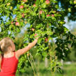 A little girl picking an apple — Stock Photo