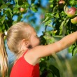 A little girl picking an apple - Stockfoto