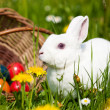 Easter bunny with eggs on a — Stock Photo #5024466