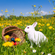 Easter bunny with eggs on a — Stock Photo #5024475
