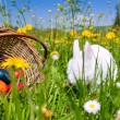Easter bunny with eggs on a — Stock Photo