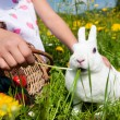 Child petting the Easter bunny — Stock Photo #5024477