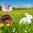 Easter bunny on a beautiful  — Foto de Stock