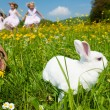 Easter bunny on a beautiful — Stock Photo #5024491