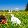 Easter bunny on a beautiful - Stock Photo