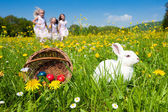 Easter bunny on a beautiful — 图库照片