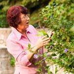 Gardening - woman harvesting — Stock Photo