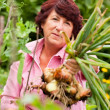 Woman harvesting onions in — Stock Photo #5050443