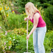 Woman gardener digging the — Stock Photo #5050444