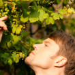 Young man looking on a grape — Stock Photo