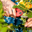 Woman doing garden work — Stock Photo