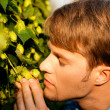 Man Harvesting hop - Stock Photo