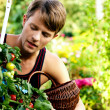 Gardening - woman — Stock Photo