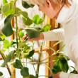 Woman watering the plants — Stock Photo #5051633
