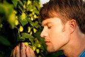 Man Harvesting hop — Stock Photo