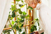 Woman watering the plants — Stock Photo