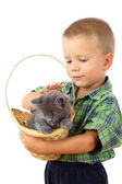 Little boy who pet a gray kitty in wicker — Stock Photo