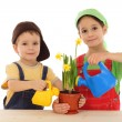 Little children caring for potted narcissus — Stock Photo