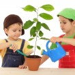 Stock Photo: Little children caring for plant