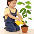 Smiling little boy watering the plant with yellow can — Stok fotoğraf