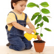 Smiling little boy watering the plant with yellow can — Stock Photo