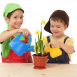 Stock Photo: Little children caring for potted narcissus